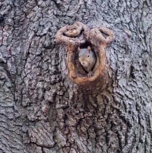 SS Tree Hole